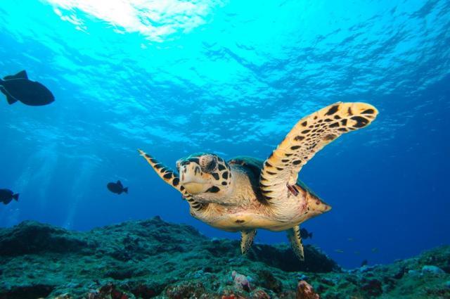 fernando-de-noronha-vida-marinha1